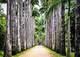 بازدید از باغ گیاه شناسی باستانی ریو دو ژانیرو در برزیل