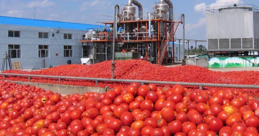 سوءاستفاده کارخانجات رب از مصرف کنندگان، مردم گوجه بخرند و رب دربیاورند