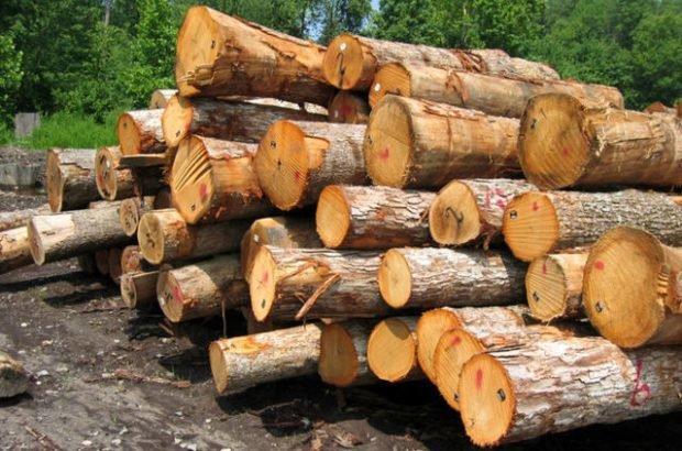 کشف 3 تن چوب جنگلی قاچاق در میاندورود