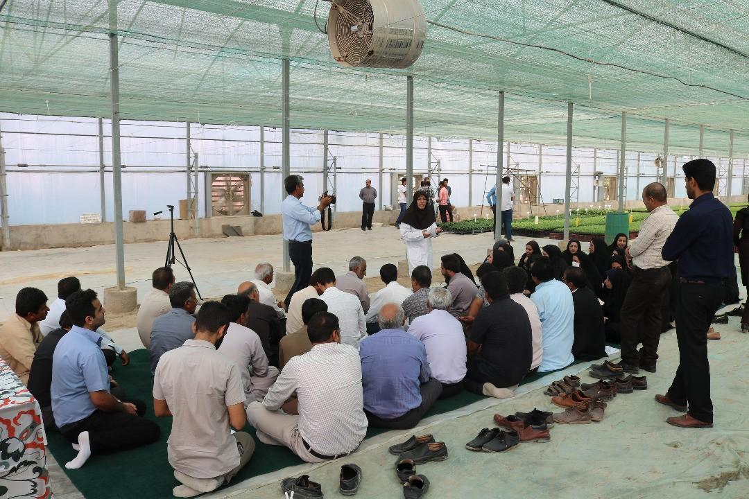کارگاه آموزشی کشت گلخانه ای در جنوب کرمان