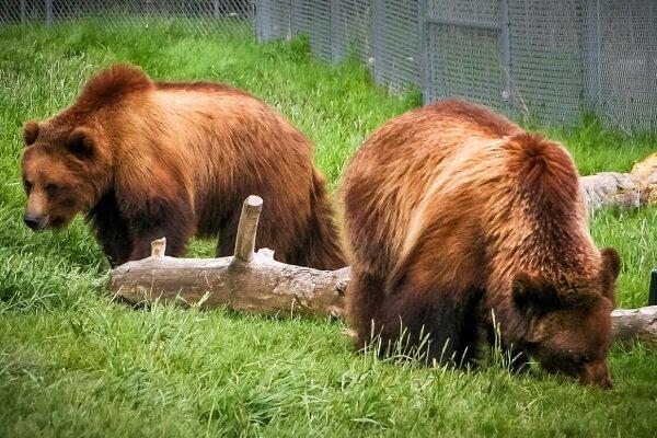 تحقق سفرهای فضایی طولانی با الهام دریافت از خرس ها