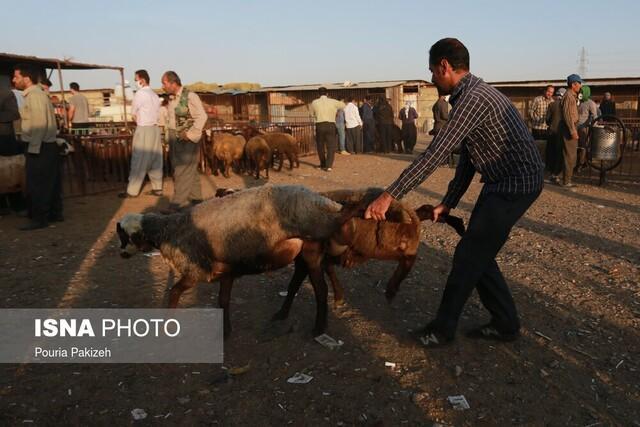 23 پروژه بهبود تولیدات دامی در سیستان وبلوچستان به بهره برداری رسید