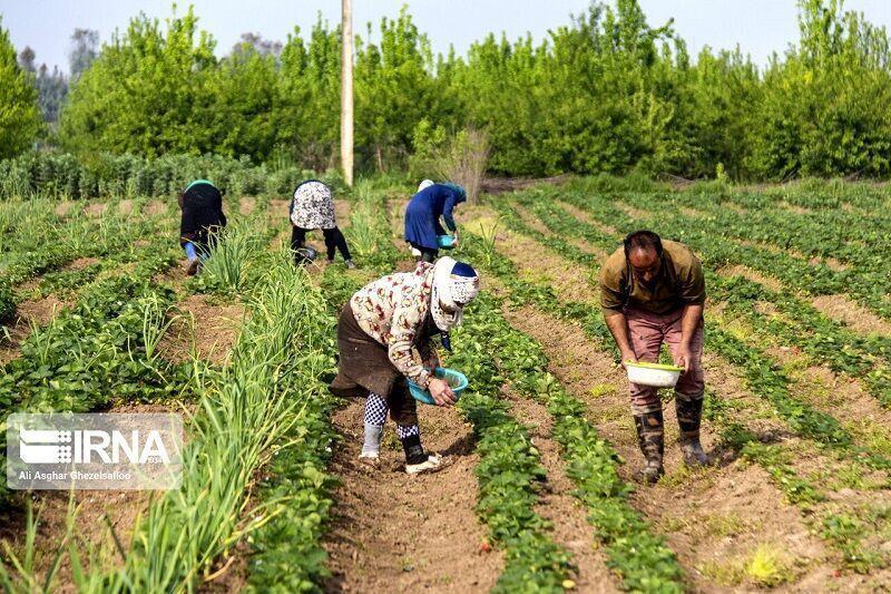 خبرنگاران 11 هزار میلیارد ریال برای توسعه کشاورزی ایلام سرمایه گذاری شد