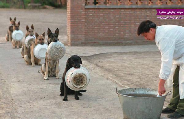 تصاویری زیبا از نظم سگ های پلیس در چین