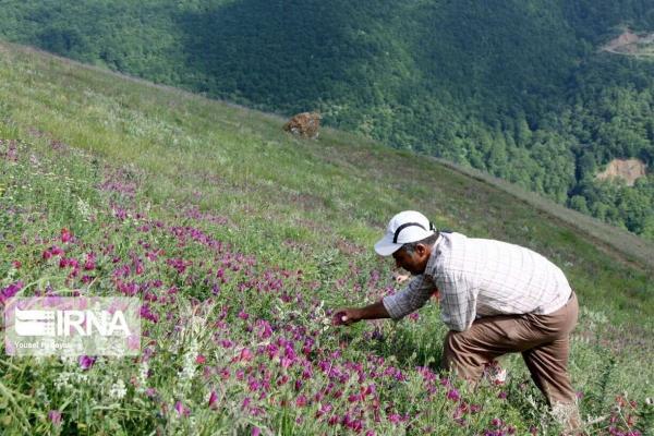 خبرنگاران توسعه کشت گیاهان دارویی در اولویت است