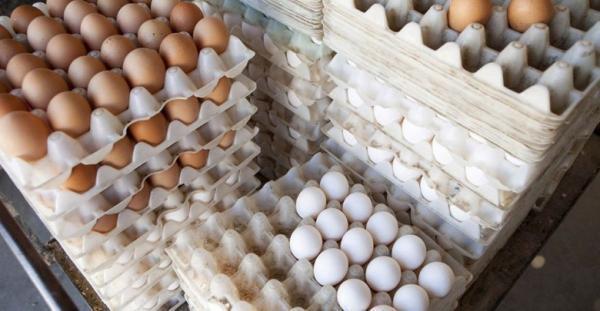 ضدعفونی تخم مرغ های بسته بندی شده با فناوری