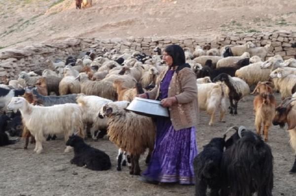 زندگی ایلی گرفتار خشکسالی و کرونا، عشایر به فروش قسطی گوسفندان روی آوردند