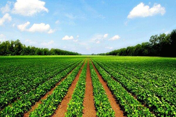 کرونا و صنعت کشاورزی